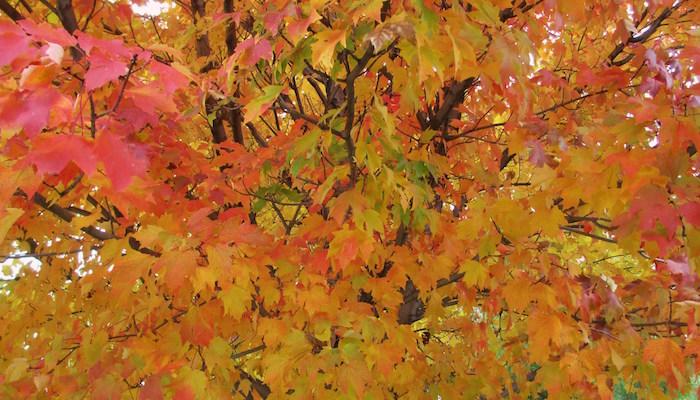 Autumn Tree, door Sharon, via Flickr.
