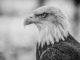 Remember When America Was America?, door Thomas Hawk, via Flickr.