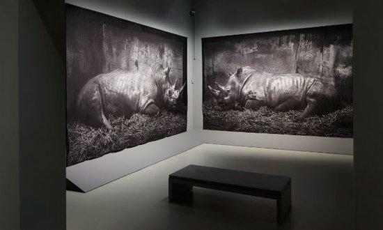 Zoo, Craigie Horsfield, 2007. Bron: http://centraalmuseum.nl/bezoeken/tentoonstellingen/Craigie-Horsfield/