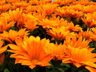 Foto: Shades of Orange, door Maurits Verbiest, via Flickr.com