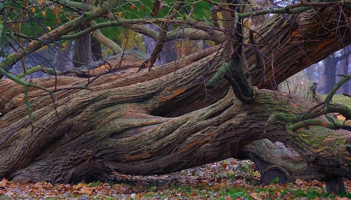 Foto: Tree, door Tim Vrtiska, via Flickr.com